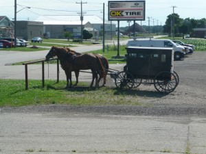Horse and buggy in a parking lot