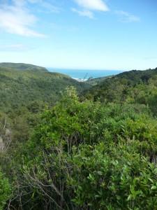 Looking toward Piha Beach